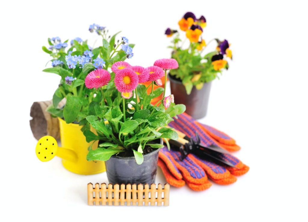 Marguerite flowers and other spring flowers and garden tools on
